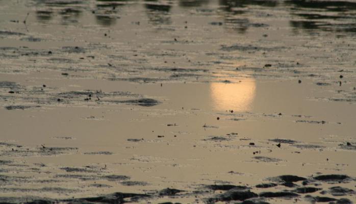 Sénégal 2006